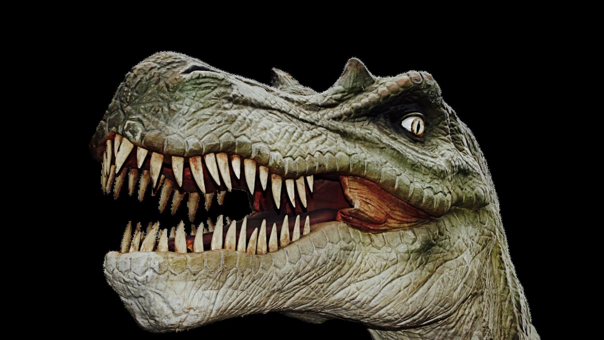 Top 4 des meilleures idées de décoration dinosaure